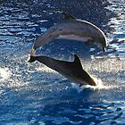 Playing Dolphines by DBArt
