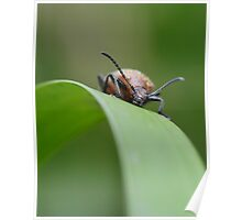 Bug 26.11.08 Poster