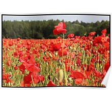 Poppy fields in Berkshire Poster