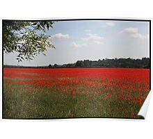 Poppy field, Berkshire Poster