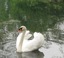 Barton Swan by seahorsieus