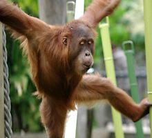 Orangutan by Katrina Freckleton