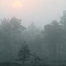 18.7.2015: Sunrise by Petri Volanen