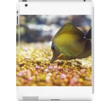 The yellow tang (Zebrasoma flavescens) iPad Case/Skin