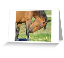 Mare at Smith's Farm, Shorne, Kent Greeting Card