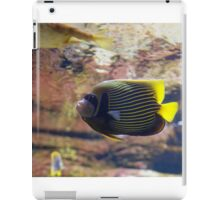 The emperor angelfish - Pomacanthus imperator iPad Case/Skin