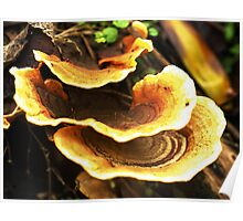 Fungi Layers - Morwell National Park, Australia Poster