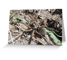 Wolf Spider in Kansas Greeting Card