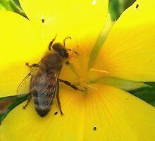 Feasting on a yellow flower by ♥⊱ B. Randi Bailey