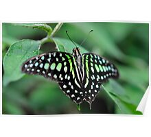 Butterfly Gems - Green Jay Poster
