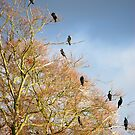 Cormorant Family Tree by Darren Bailey LRPS