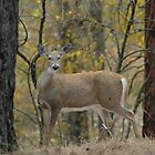 Deer Turning by lincolngraham