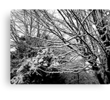 Black and white winter branches Canvas Print