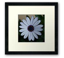 Colourwheel Framed Print