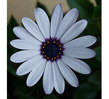 Colourwheel Photographic Print