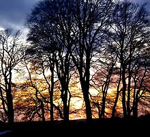Sunset trees Avebury uk by Amanda Gazidis