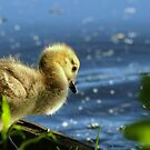 First Swim! by Franco De Luca Calce