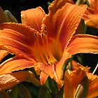 Orange Lilies by L J Fraser