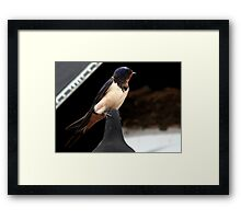 The Swallow Framed Print
