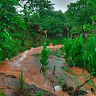 Rusty Rock Hollow Creek by Dennis Jones - CameraView
