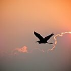 Heron at Sunset by Lynn Armstrong