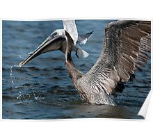 Brown Pelican and company Poster