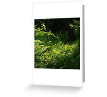 Magic fern Greeting Card