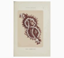 Floral Designs Series I a hand book for cut flower workers and florists John Horace McFarland 1888 0095 Lover's Knot One Piece - Long Sleeve