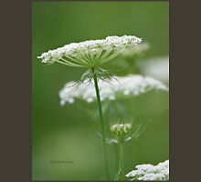 Flower Stack - Queen Anne's Lace Unisex T-Shirt