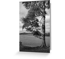 River tree [B&W] Greeting Card