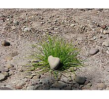 Grassy Love Photographic Print