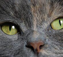 Feline charm by Febev