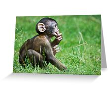Eight Week Old Barbary macaques Greeting Card