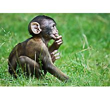 Eight Week Old Barbary macaques Photographic Print