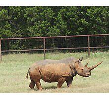 Southern White Rhino Photographic Print