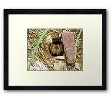 Arizona/Mexican Blonde Tarantula ~ Nesting Framed Print