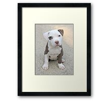 Cocamo at 8 weeks Framed Print
