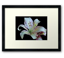 Pretty White Lily © Framed Print