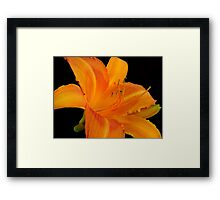 Orange  Sorbet © Framed Print