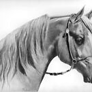 Arabian 2 by Karen Townsend