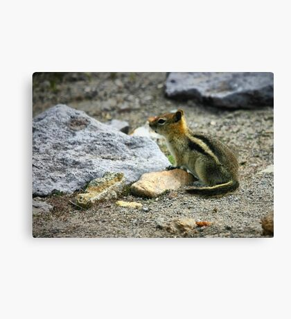 Ghost Town Critter Canvas Print