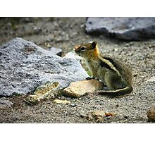 Ghost Town Critter Photographic Print