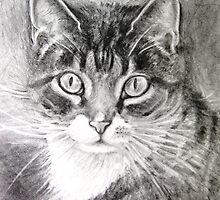 Kitten by Karin Zeller