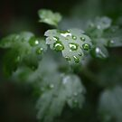 Droplets by Michael Kelly