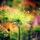 Pom Poms by Sunshinesmile83