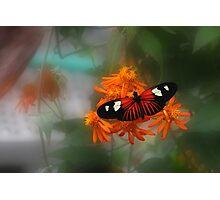 Butterfly Dreams - Krohn Conservatory Cincinnati Photographic Print