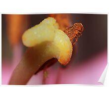 Stigma & Pollen Poster