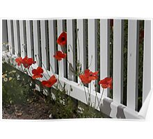 Picket Fence and Poppies Poster