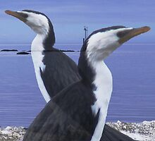 Cormorants. by Esther's Art and Photography
