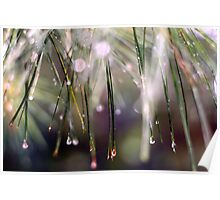 Rainy Day Pine Needles Poster
